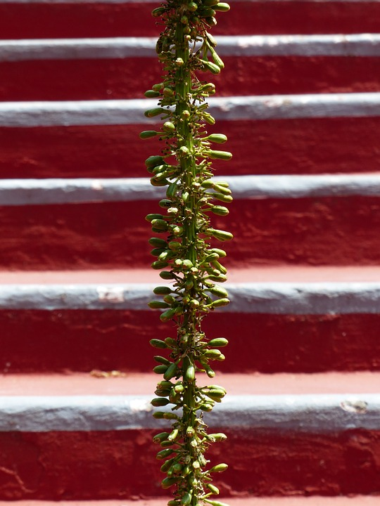 inflorescence-384305_960_720